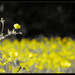 Rozkvitnutá jar