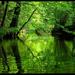 V tôni lesa