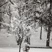 Pod stromom :-)