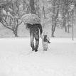 Cestou v snehu