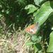Motýlik ( pre smoking )