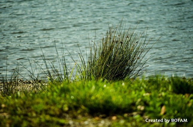 Breh jazera