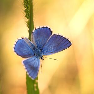 ... blue ...