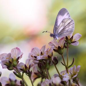 ... v kvetinárstve ...