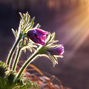 ... v paprskoch slnka ...