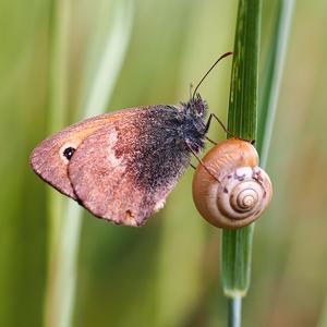 ... keď motýľ domček hľadá ...