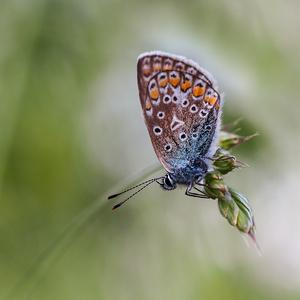 ... štartovacie plató motýľa ...