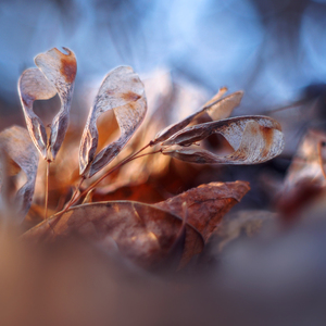 ... jesenný pútnik