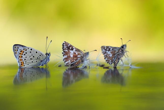 ... trio v záprahu ...