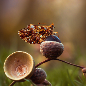 ... jesenné zákutia ...