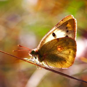 ... vo farebnom svete motýľov
