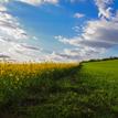 ... farby podunajských polí ...