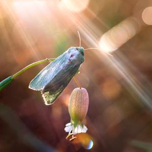 ... za svetlom nádeje