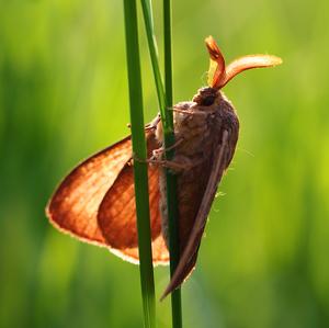 ... motýlí papagáj ...
