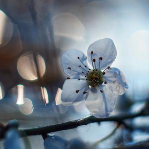 ... vo svetle jari ...