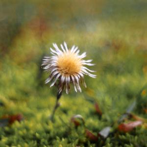 ... kvet jesene na jar ...