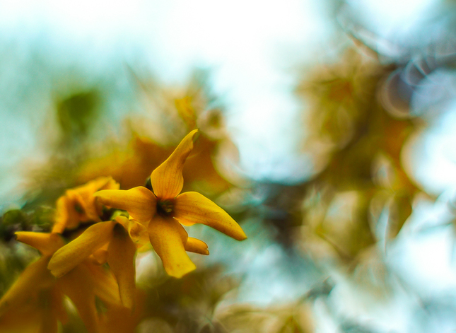 ... zlatý dážď ...