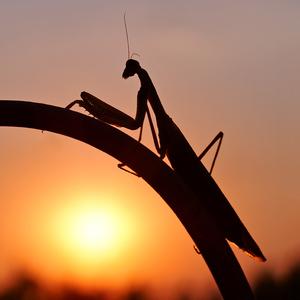 ... sledovanie západu Slnka