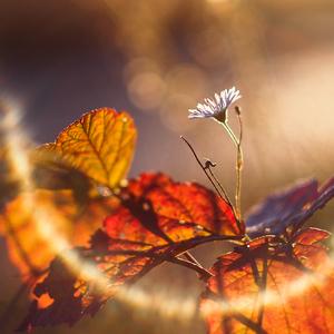 ... jesenná svetlosť ...