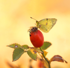 ... jesenné mihnutia ...