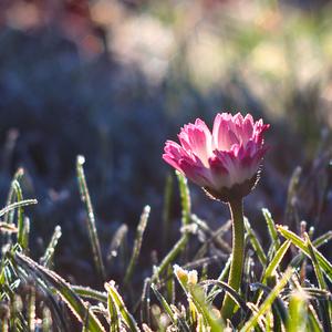 ... mrazivá krása rána ...