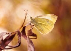 ... v jesenných farbách maľované