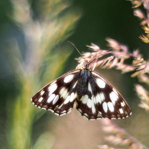 ... motýlie snenie