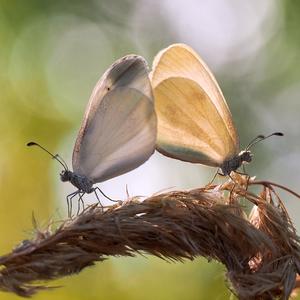 ... dotyky nežných krídiel ...