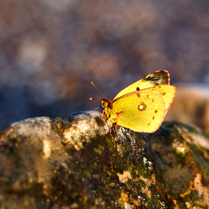 ... motýlí výstup na Rysy ...