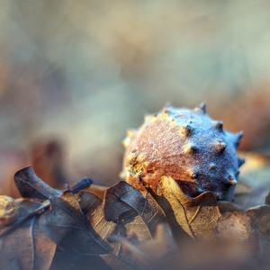 ... tajomstvá v listí ukryté