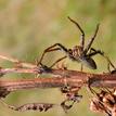 ... pozdrav pavúka ...