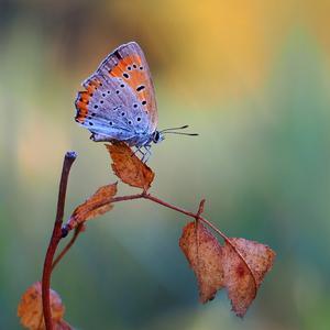 ... vítajúc jeseň farbami