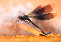 ... nežné krídla ...