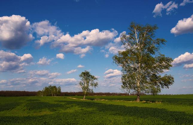 ... farby podunajských polí II