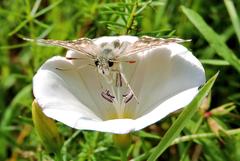 ... motýlie hontŕľanie sa ...