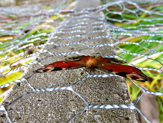 ... zažehlený v plote? ...