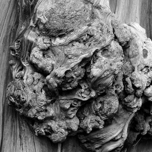 Metamorfózy dreva