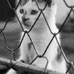 mačka za plotom