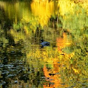 Na jazere maľované