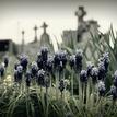 Na cintoríne ...
