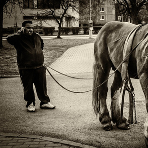 Kôň a sídlisko.