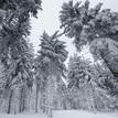 Slovenské palmy