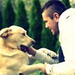 Pes - Najlepší priateľ človeka