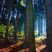 východ slnka v lese