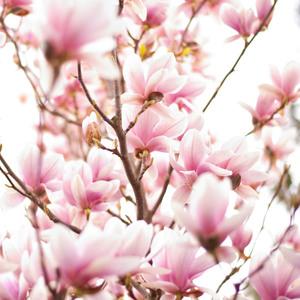Najkrajší kvet jari