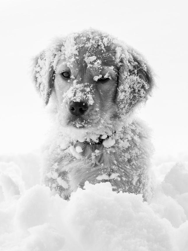 Keď je snehu nad uši