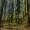 Kojšovský les