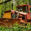 divoká zver v lese