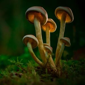 Čarovné huby