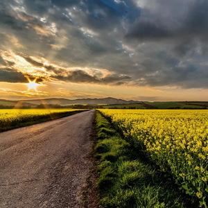 Na poľnej ceste